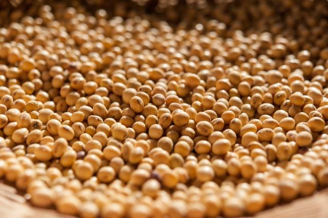 たんぱく質の豊富な大豆