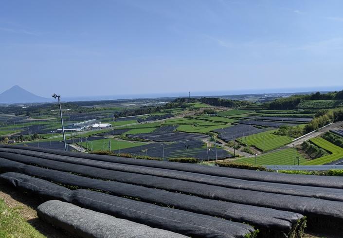 2020年お茶の生産量は、静岡県を抜いて鹿児島県が1位(日本一)になる?!本当か? 検証しました‼
