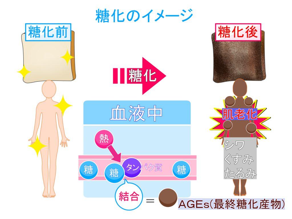 糖化のイメージ 糖化の前と後 体温の熱によって血液中の糖とたんぱく質が結合 AGEsが生成される