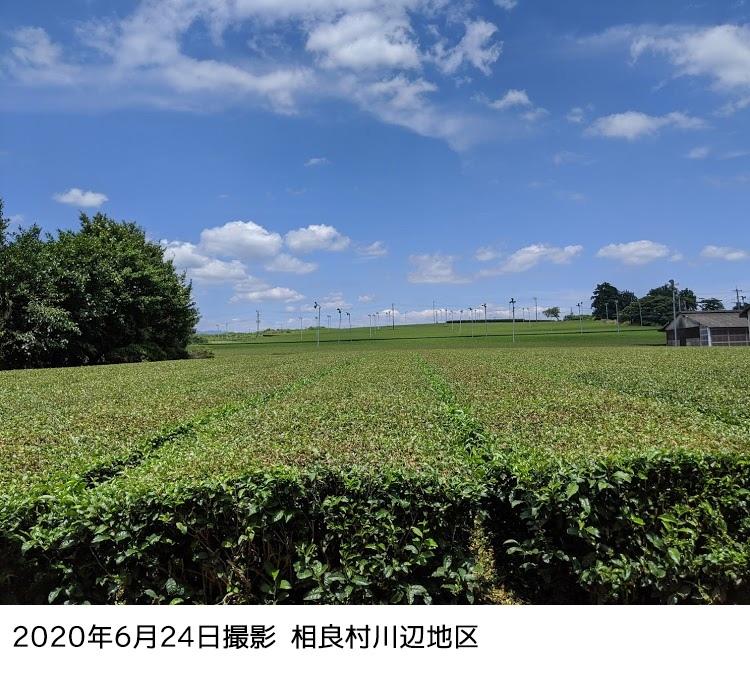 球磨地方 相良村川辺地区の茶畑 2020年6月24日撮影